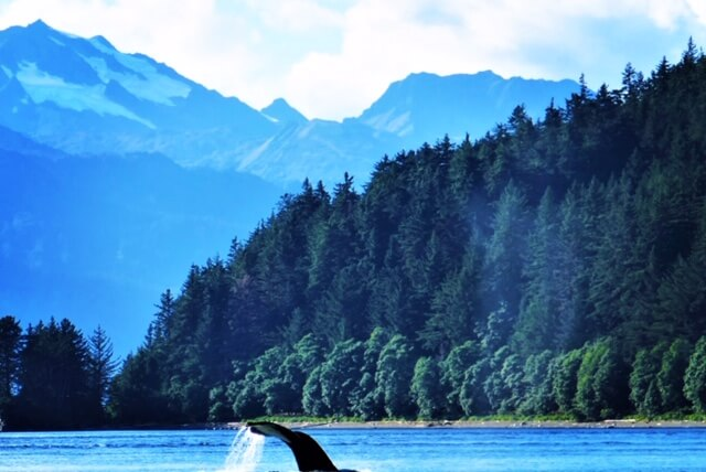 Top 5 reasons to cruise to Alaska