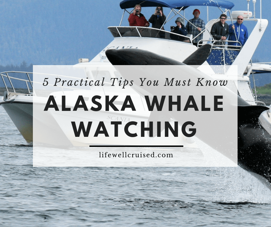 5 Practical Alaska Whale Watching Tips You Need to Know