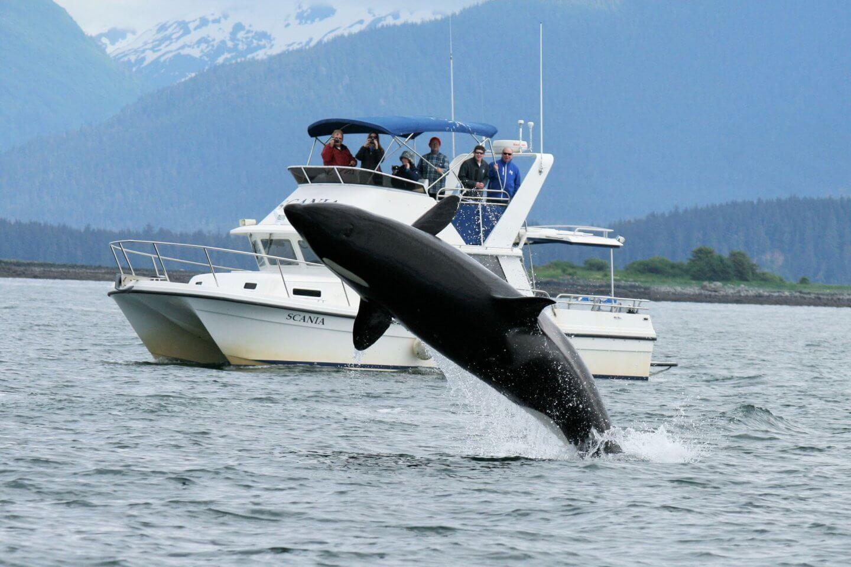 5 practical alaska whale tips